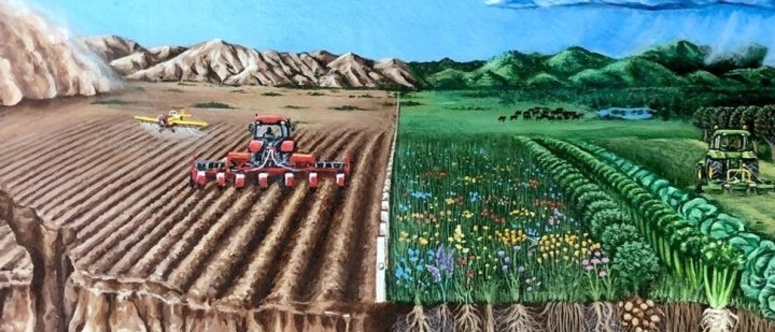 Prijsverschil remt de ontwikkeling van duurzame landbouw