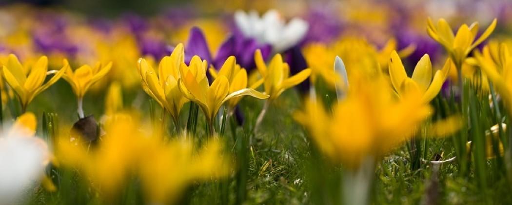 Biologische bloembollen informatie en tips