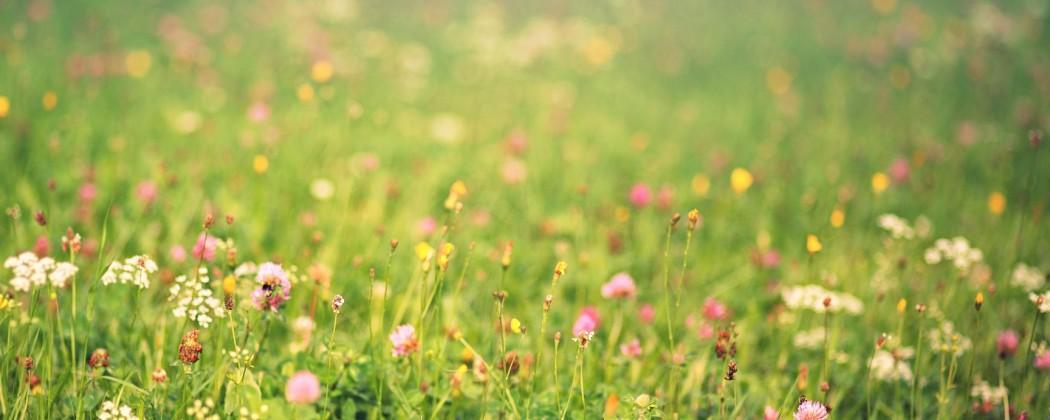 De Landelijke zaaidag voor bijen en vlinders op 22 april gaat door