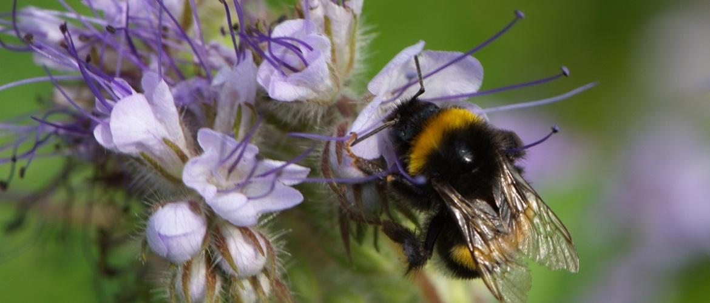 Succes voor de bijen en onze gezondheid