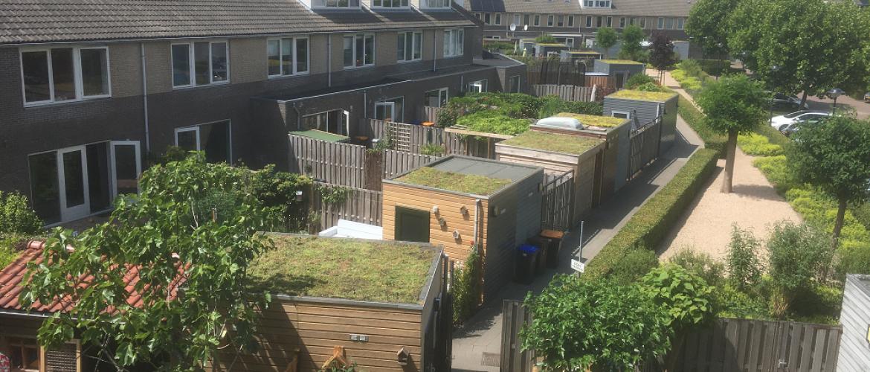 Sedum daken project Utrecht Terwijde: steun voor de bijen en de Bijenstichting