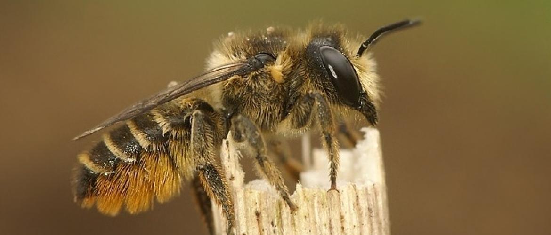 Bijen helpen in stad en dorp