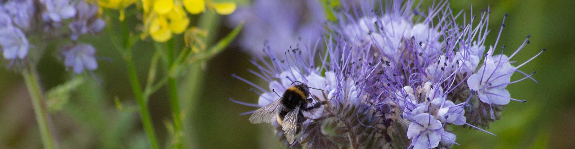 Bijen afbeelding Bijenstichting