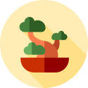 Beste resultaat van mijn bonsai