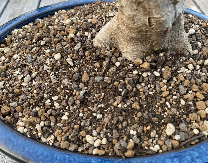 Bonsai loofbomen grond1