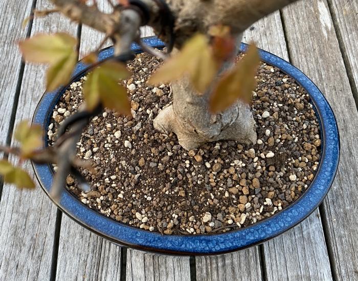 Bonsaigrond loofbomen2