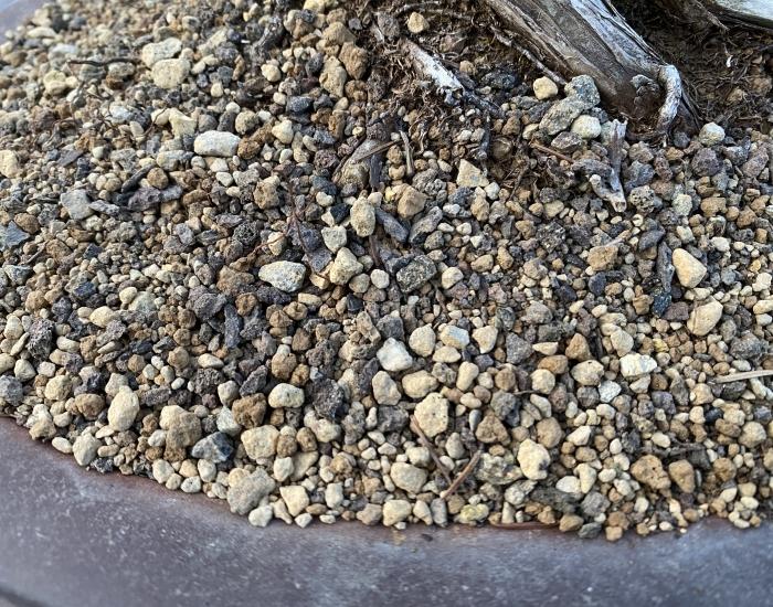 Bonsaigrond naaldbomen2