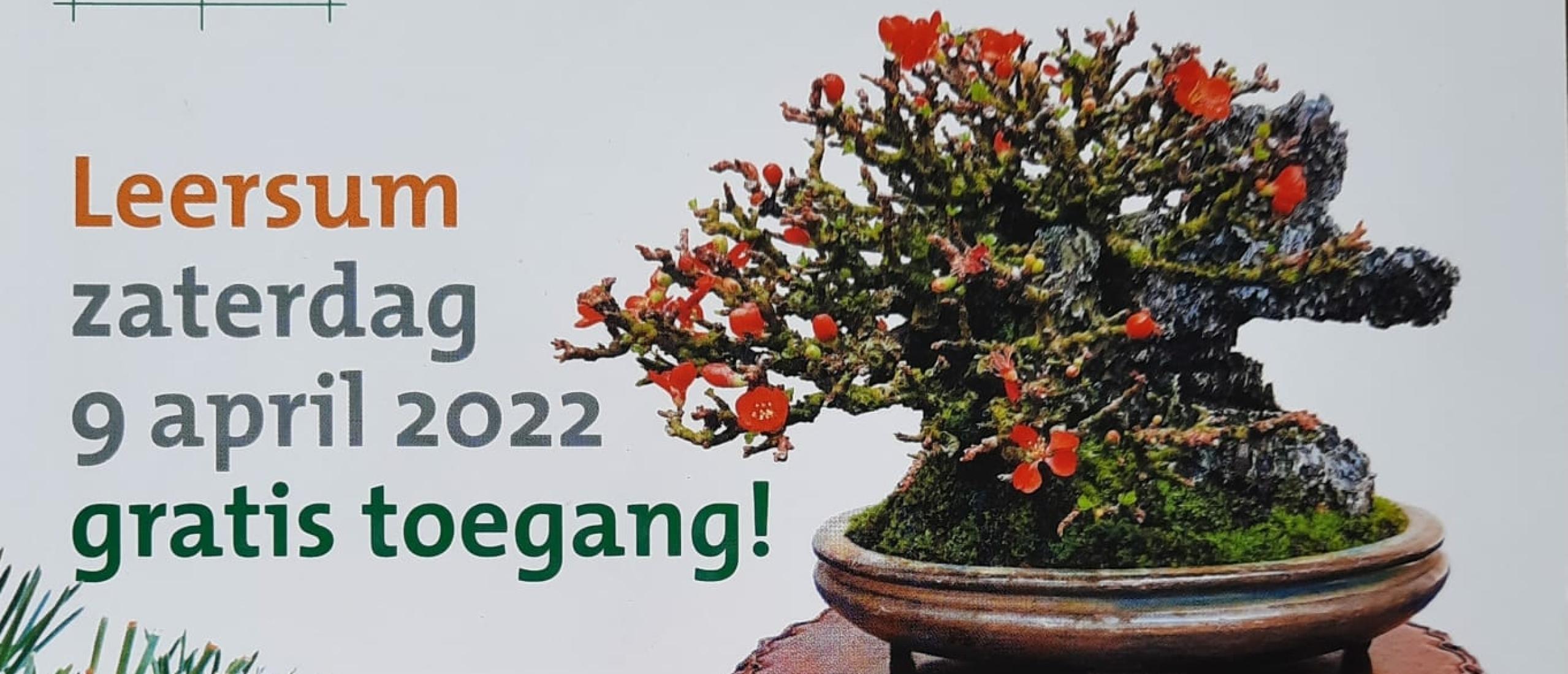 Bonsai show simultaan demo 9 april 2022