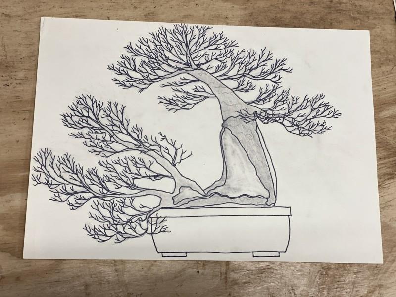 Bonsai tekening Prunus Mahaleb