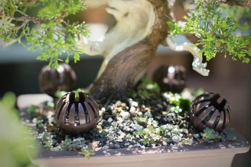 Hoe bemest ik een bonsai?