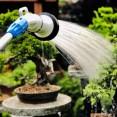Bonsai water geven