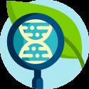 Hoe bestrijd ik bonsai ziekten en plagen?
