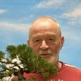 Samenwerken aan je bonsai