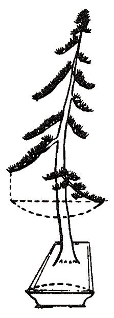 Hoe bepaal ik de breedte van een bonsaischaal?-2