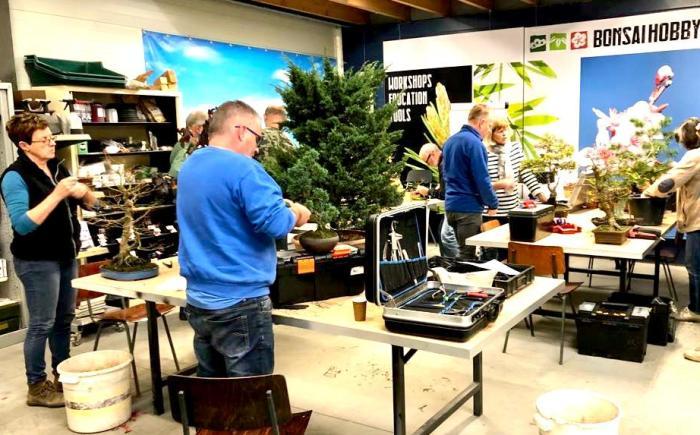 Samen werken aan je bonsai bomen
