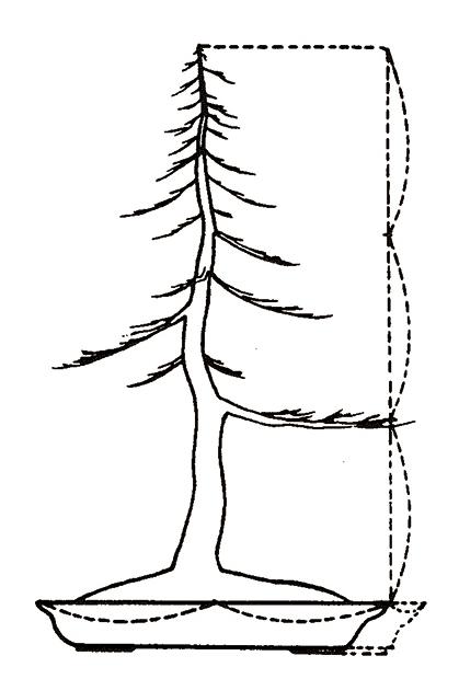 Hoe bepaal ik de grootte van een bonsaischaal?