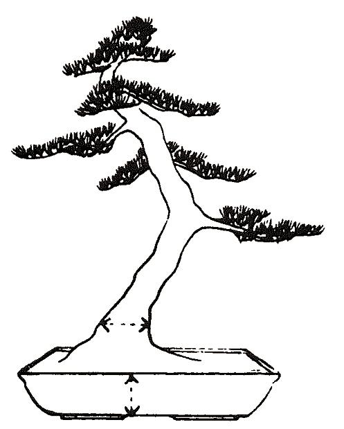 Hoe bepaal ik de hoogte van een bonsaischaal?