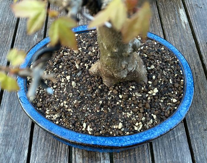 Bonsaigrond loofbomen3
