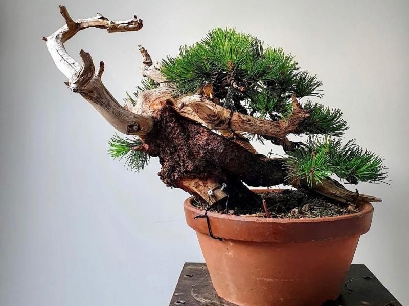 Resultaat bonsai workshop