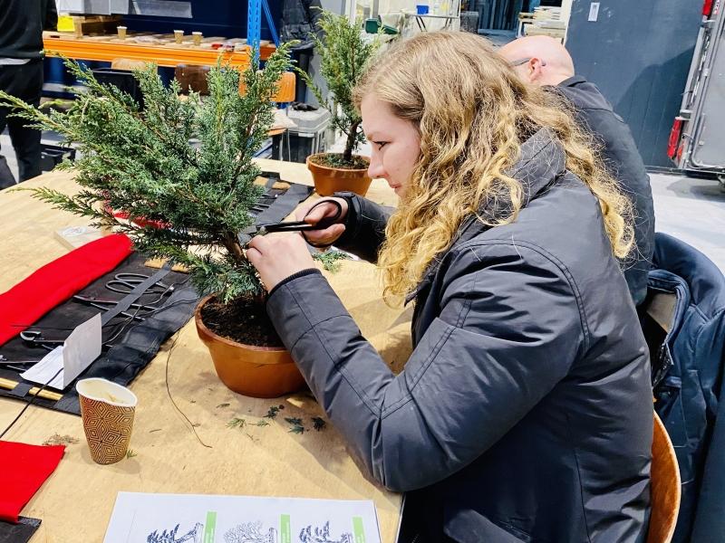 Leren snoeien bonsai beginners cursus1