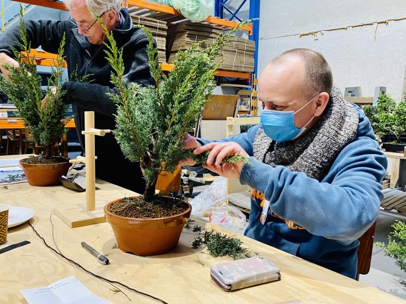 Leren snoeien bonsai beginners cursus2