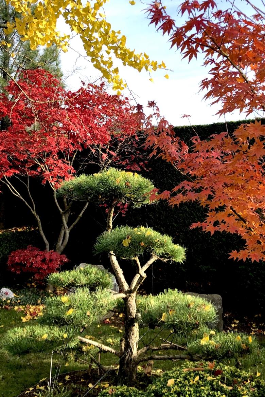 Bonsai verpotten in de herfst