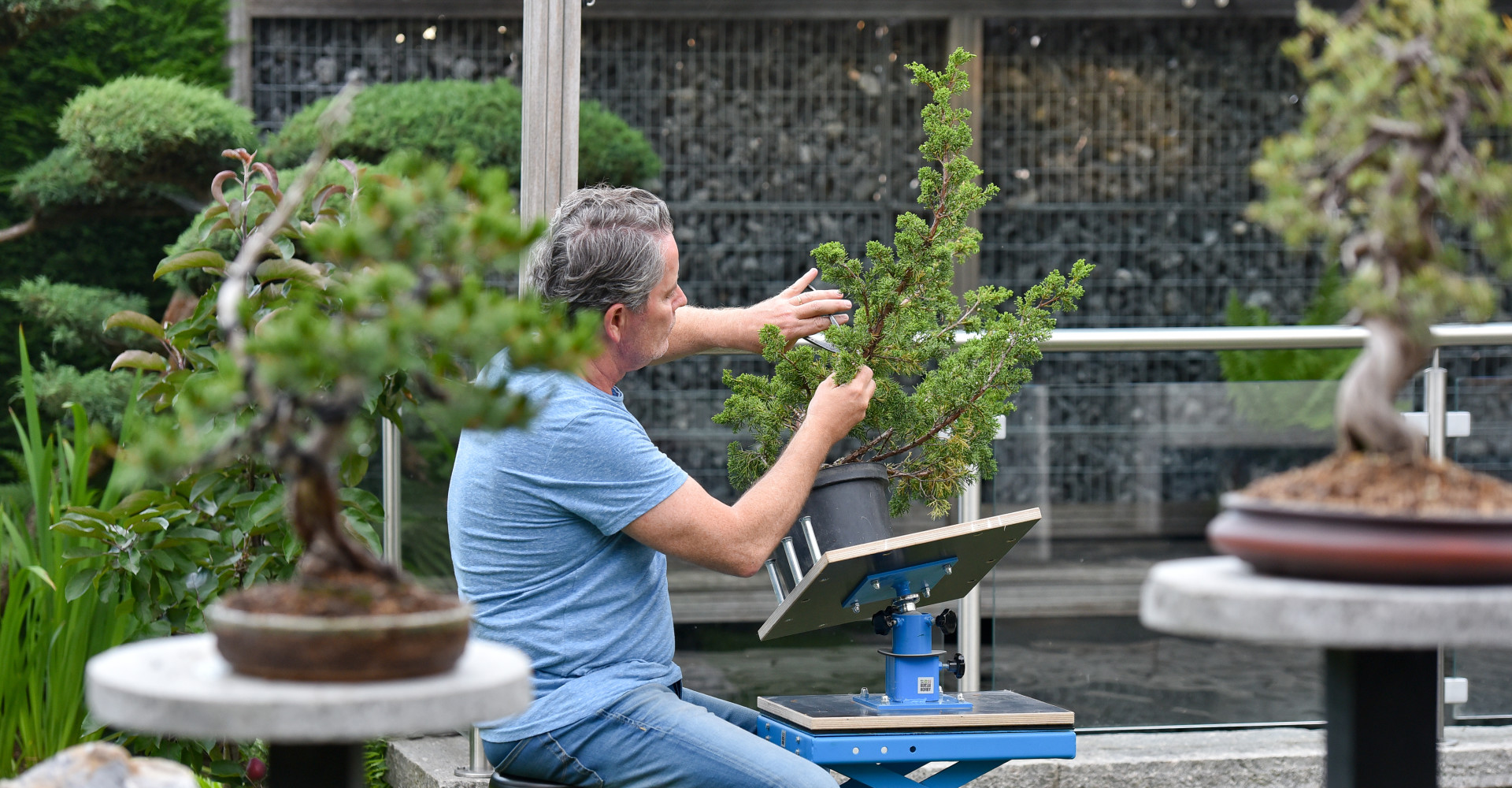 Wie is bonsaihobby?