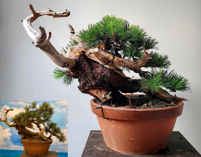 Workshop bonsaihobby voor en na