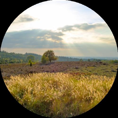 Groepsaccommodatie Overijssel  landschap