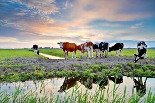 Groepsaccommodatie Groningen in de natuur weilanden