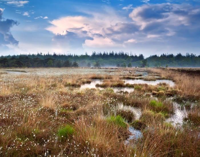 Groepsaccommodaties in de natuur van Drenthe