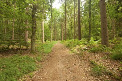 Groepsaccommodaties in de natuur van de Achterhoek wandelen