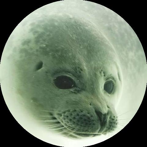 Groepsaccommodatie in Groningen de zeehondencreche pieterbuuren