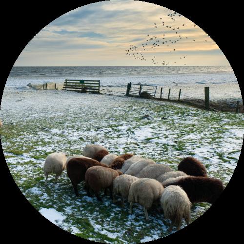 Groepsaccommodatie in Flevoland polderlandschappen in de winter en mist