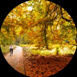 Groepsaccommodatie Gelderland wandelingen in het bos