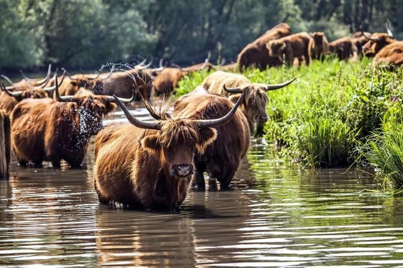 Groepsaccommodatie in Noord-Brabant in de bossen met dieren