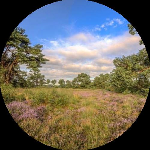 Een groepsaccommodatie in Twente met een bosrijke omgeving