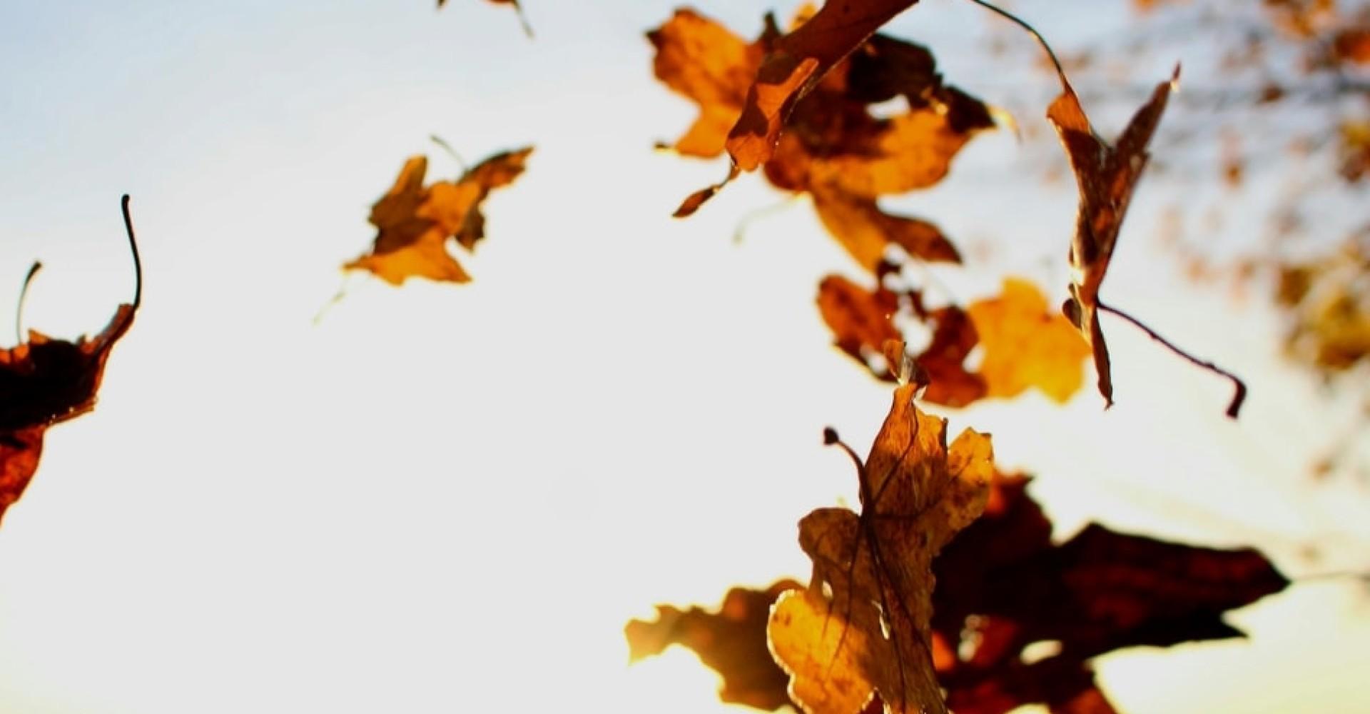 Herfst wildgerechten