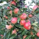 appels  voor de crumble