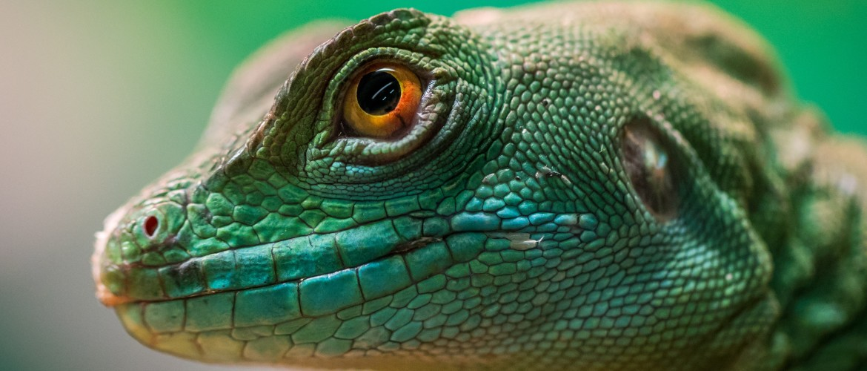 Het reptielenbrein, zoogdierenbrein en mensenbrein: hoe werkt je hoofd?