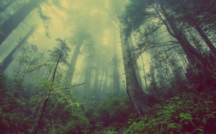 Prachtige oerbossen