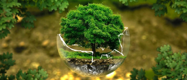 Zo verkloot je de planeet een stukje minder: 12 tips voor een beter milieu
