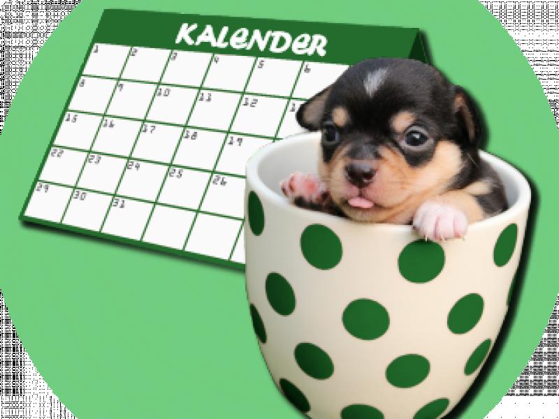 Chihuahua evenementen kalender