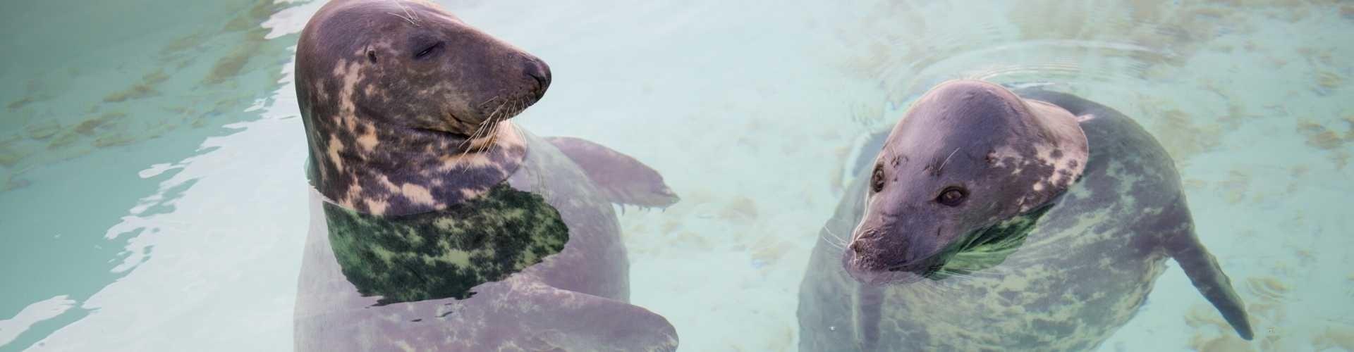 zeehonden in ecomare