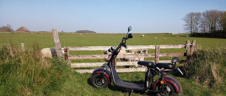 Lammetjes kijken met Pasen op Texel?