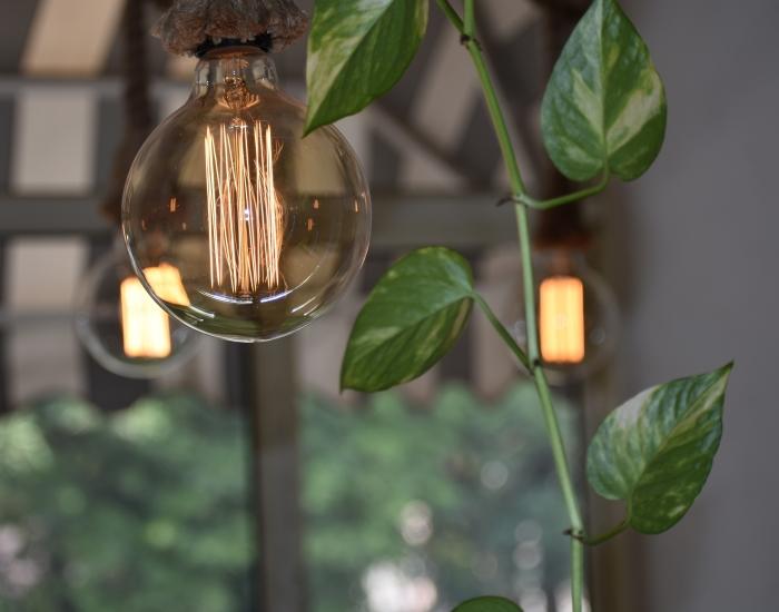 Lamp met groene plant