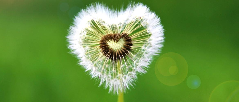 Valentijnsdag: Groene liefde & een duurzaam hartje