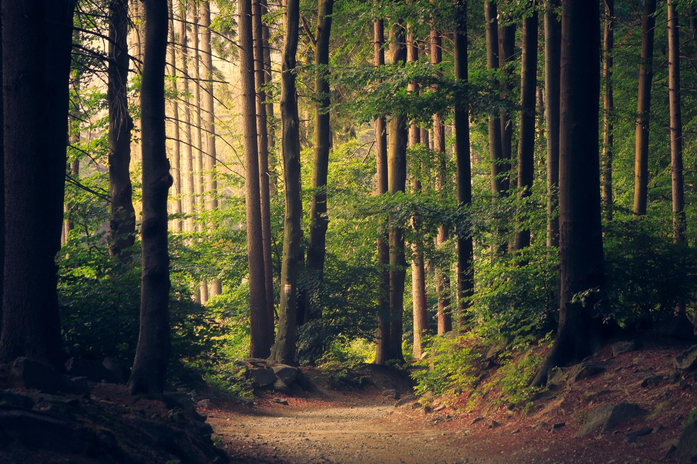 Een groen bos