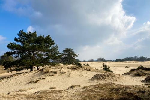 Groepsaccommodatie de Friese Ardennen nabij de Kale Duinen in Appelscha