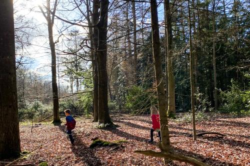 hut bouwen Drents-Friese Wold